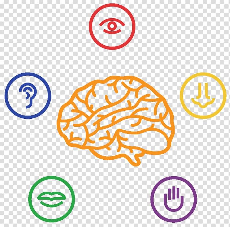 The five senses human.