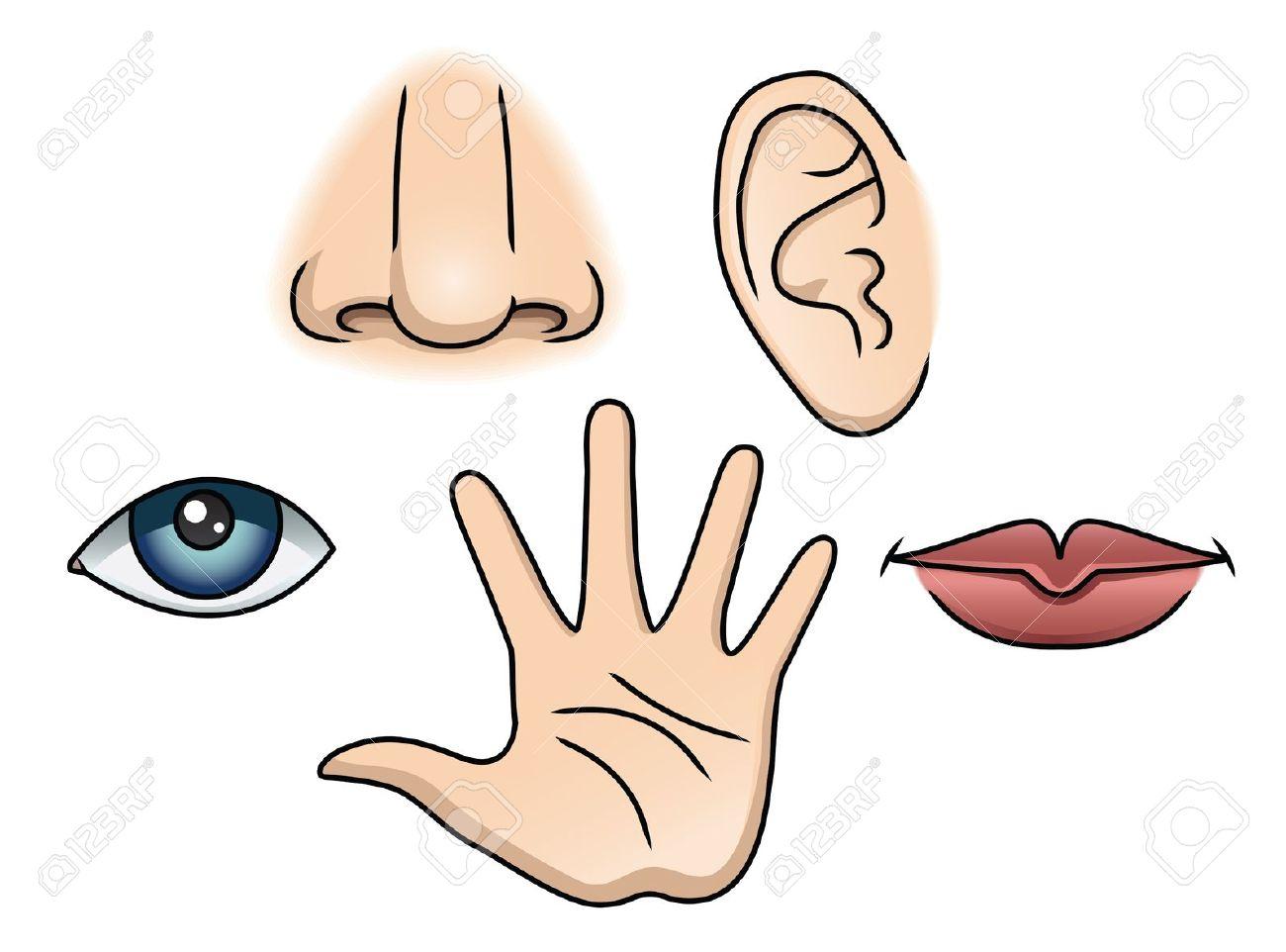 Senses clipart senses.