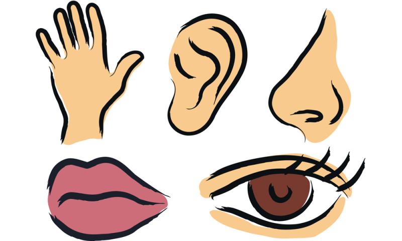 Five senses clipart free.