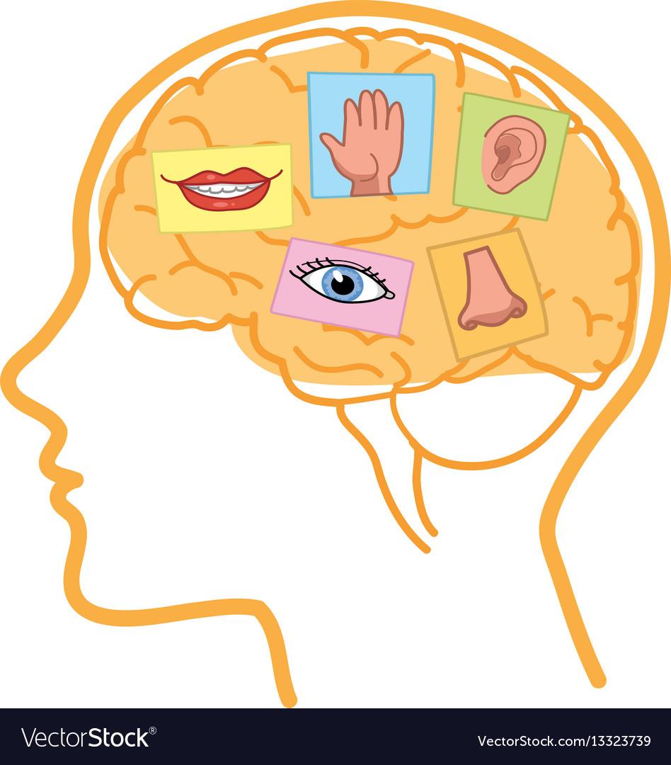 Human brain five senses.