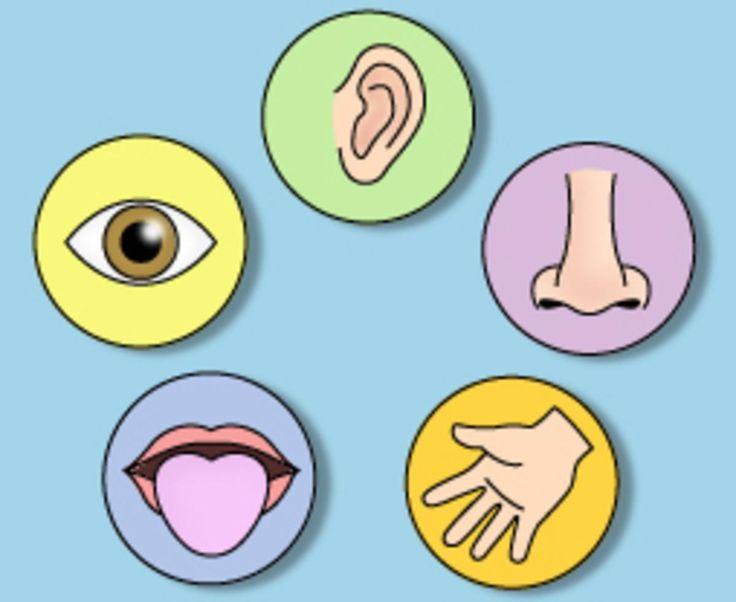 Senses clipart sensation transparent.