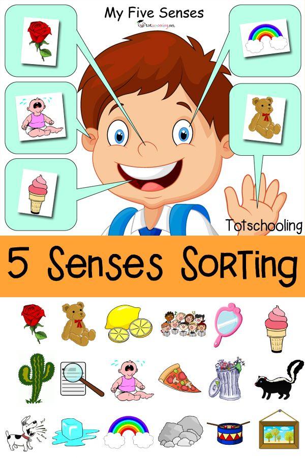 Five senses sorting.