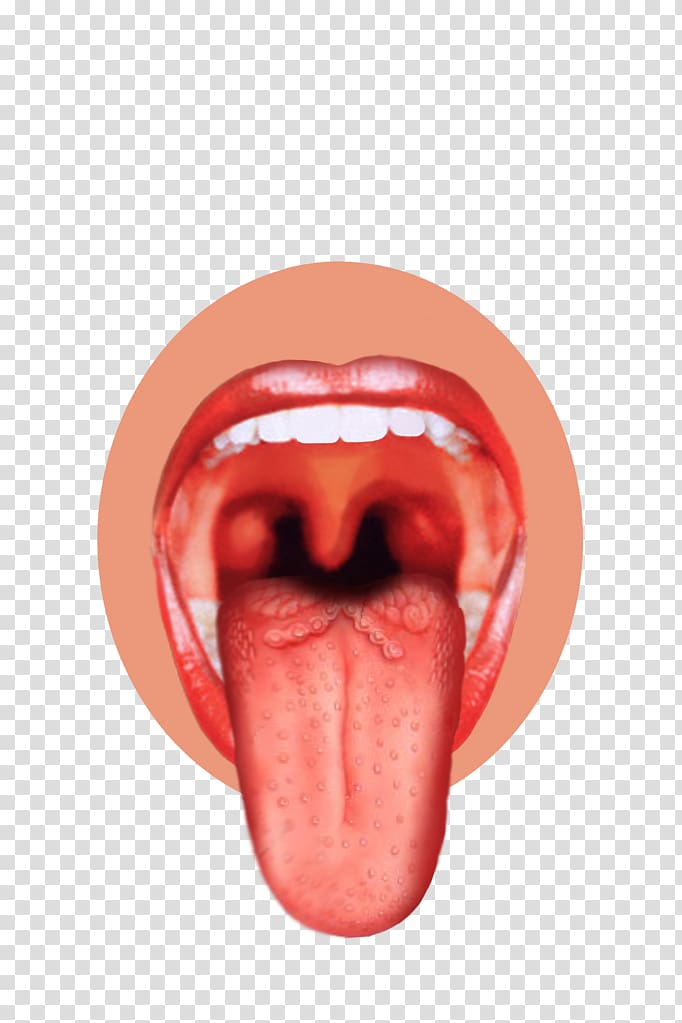Taste bud tongue.