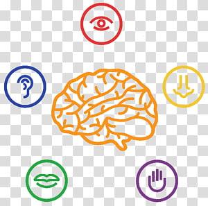 Five senses transparent.