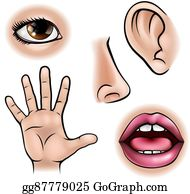 Five senses clip.