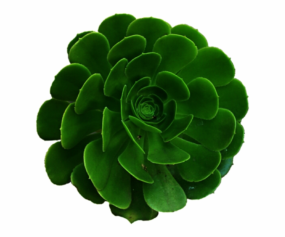 Avatan plus succulents.