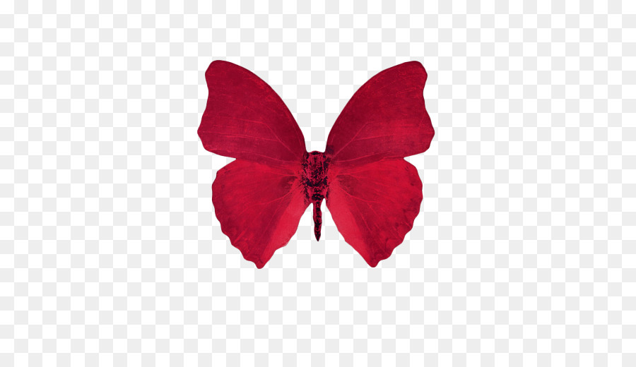 Butterfly clipart clipart.