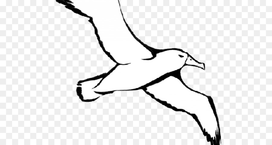 Bird line drawing.