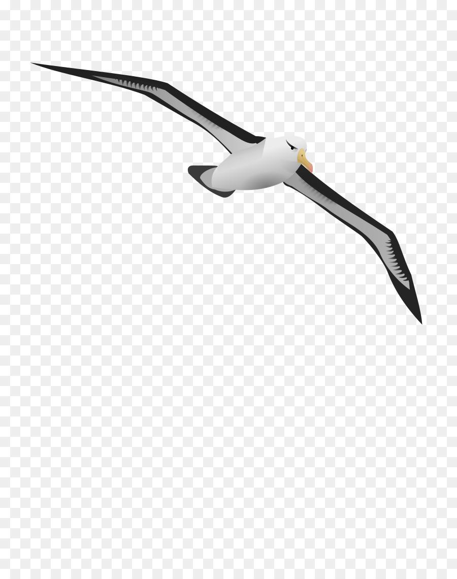 Bird wing clipart.
