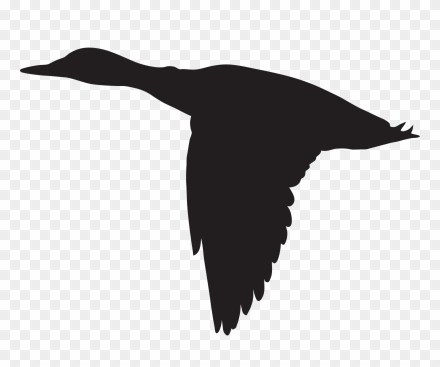 Albatross clipart clip.