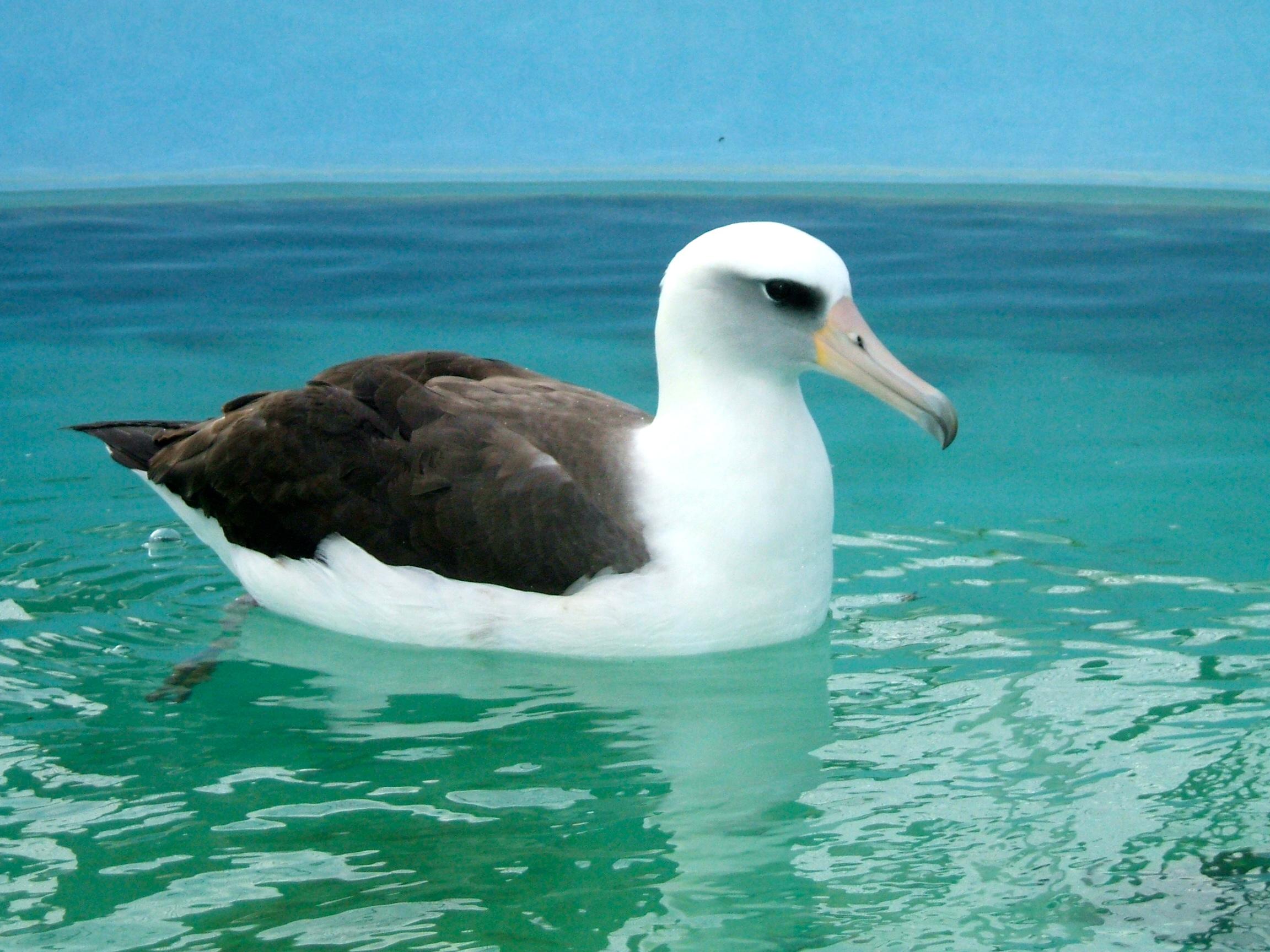 International bird rescue.