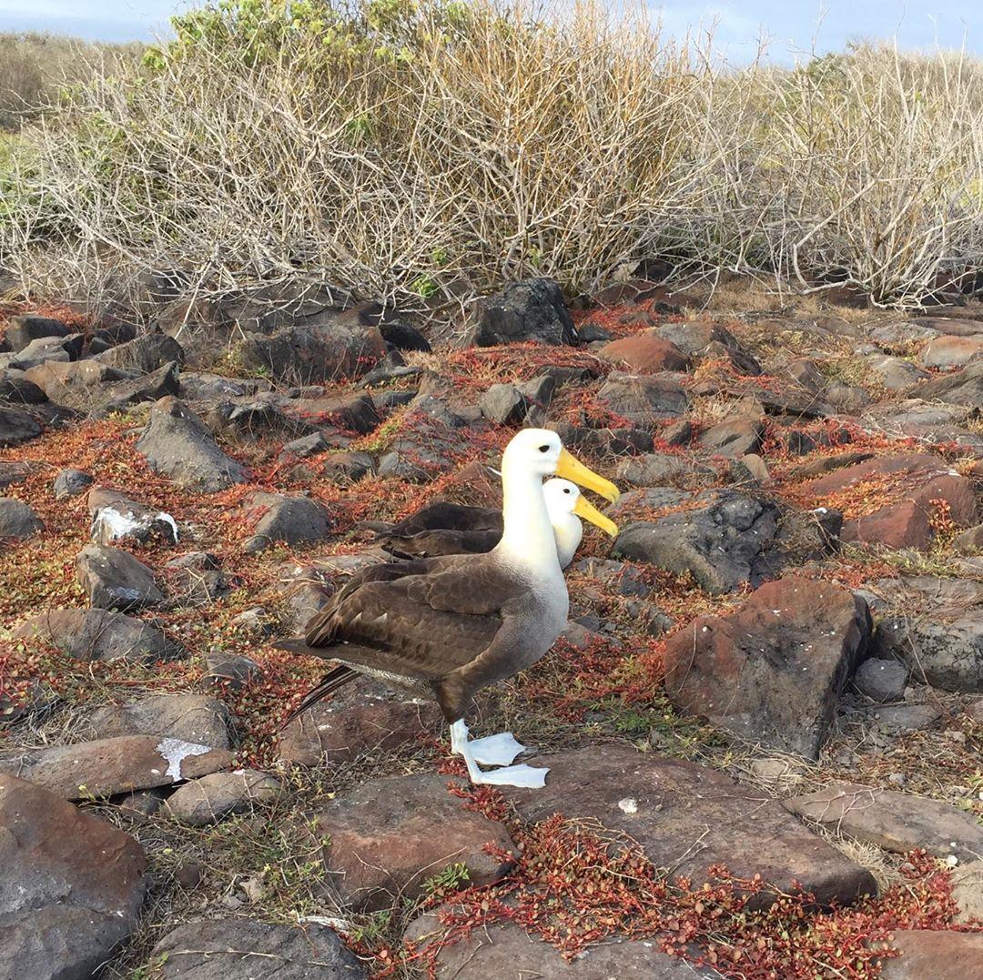 Albatrosses explore the.
