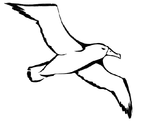 Download Albatross File HQ PNG Image