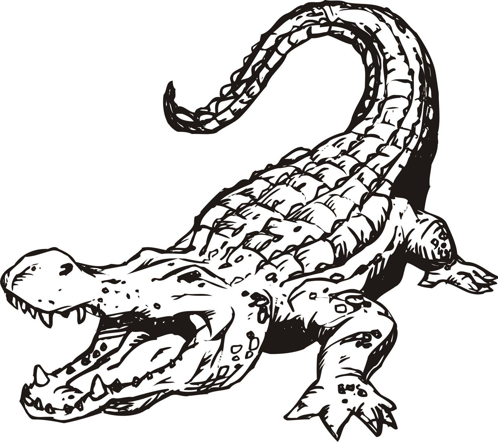 Images for alligator.