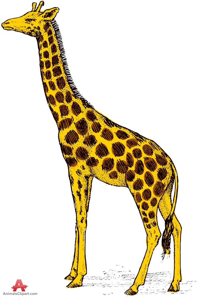Animals clipart giraffe.