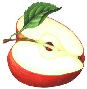 Apple Cut In Half Clipart