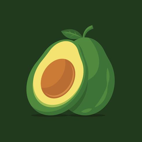 Avocado vector illustration.