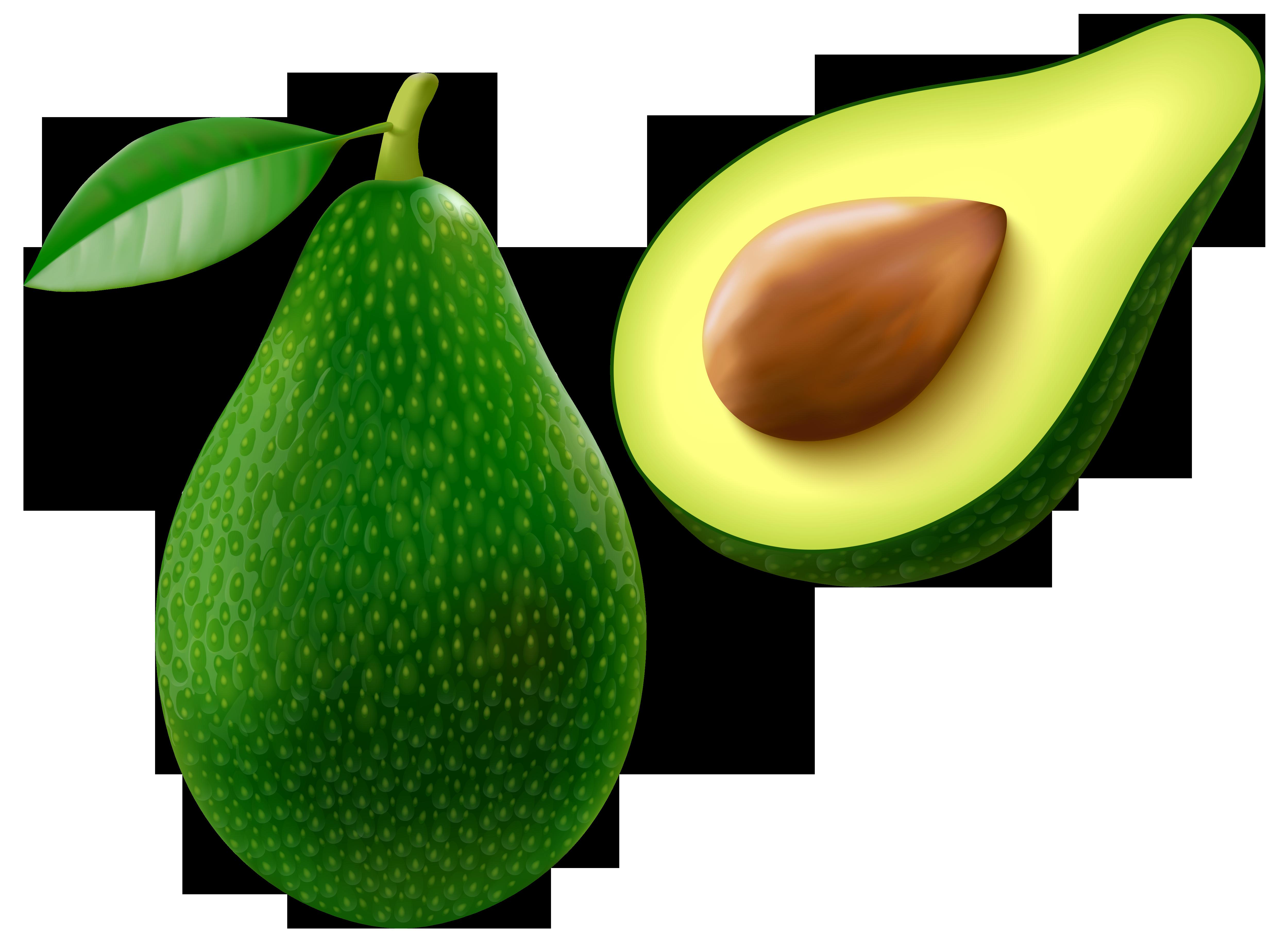Free avocado cliparts.