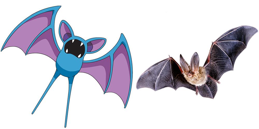 Bat clipart real.