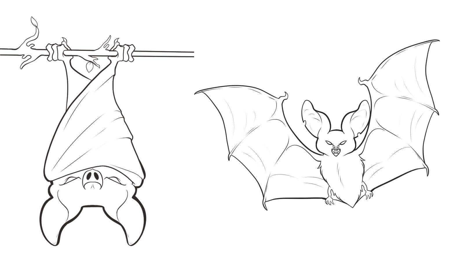 Bat hanging upside.