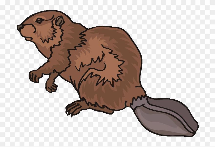 Top beaver clip.
