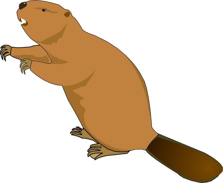 Free beaver cliparts.