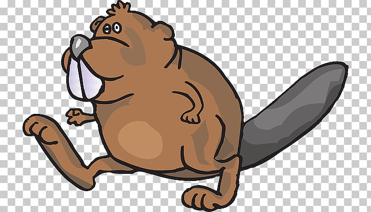 Beaver clipart castor. American png free cliparts
