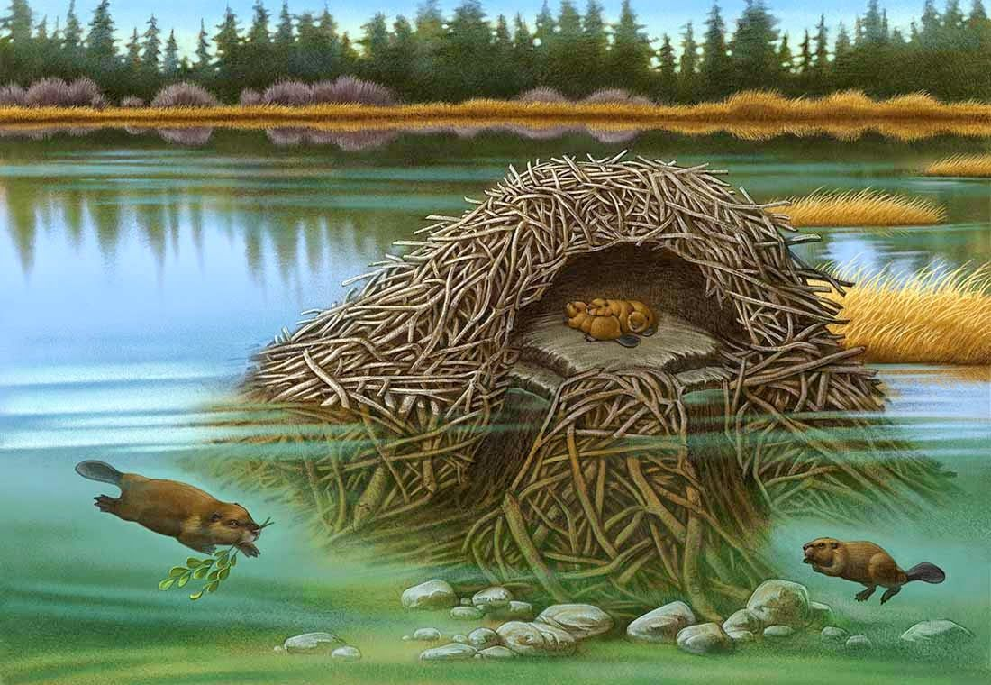 beaver clipart lodge