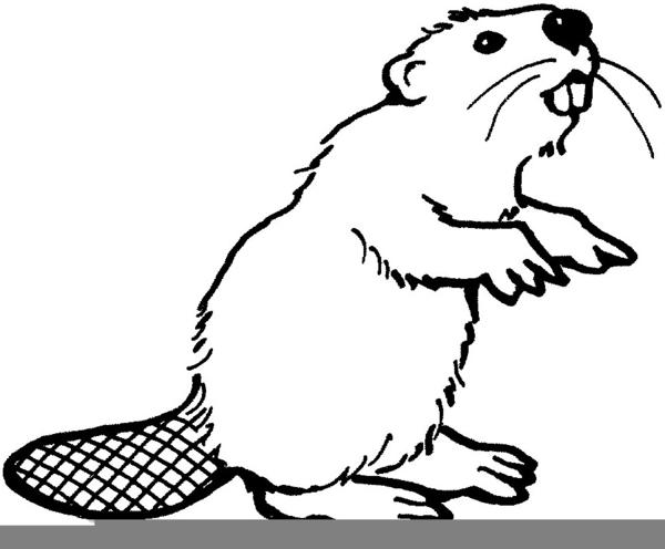 Beaver clipart outline.