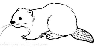 Beaver coloring pages.