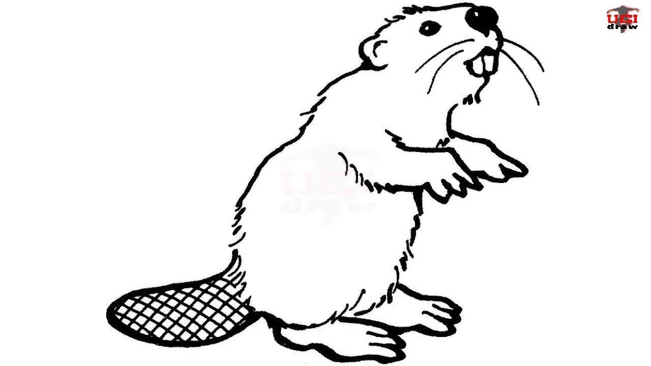 beaver clipart sketch