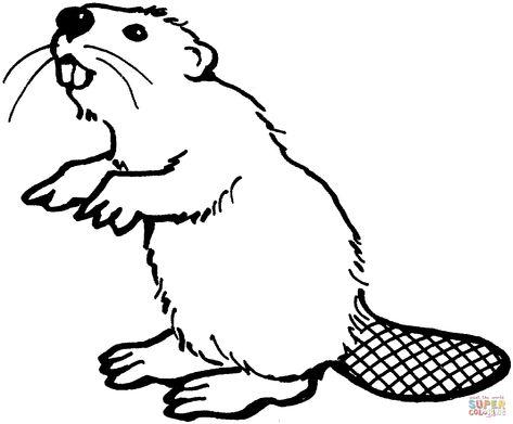 American beaver coloring.