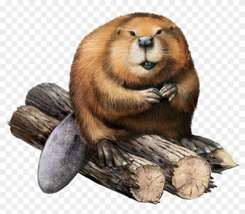 Beaver png transparent.