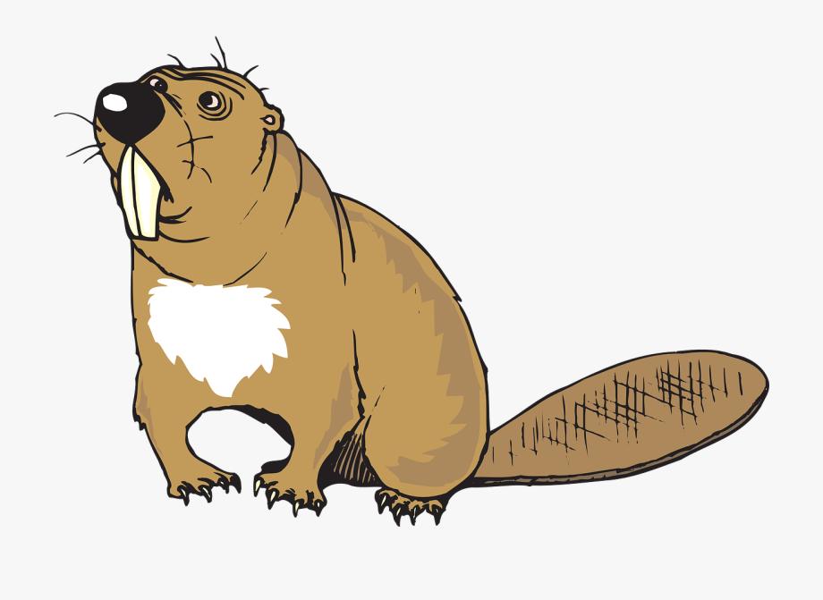 Beaver animal tail.