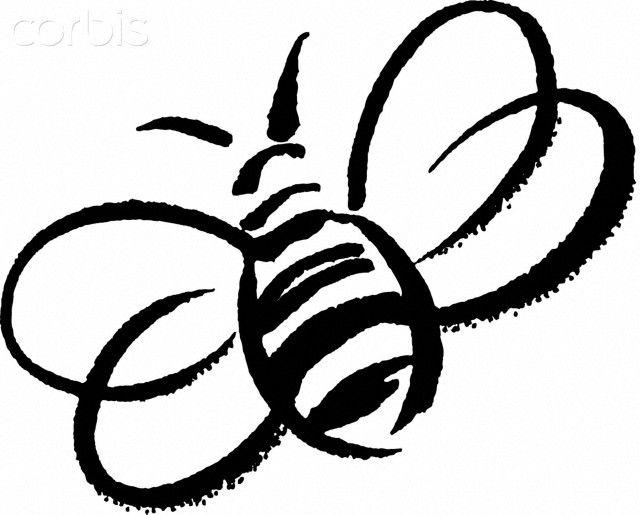 Amazing queen bee.