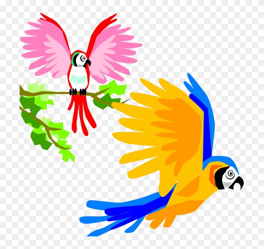 Parrot clipart tropical.