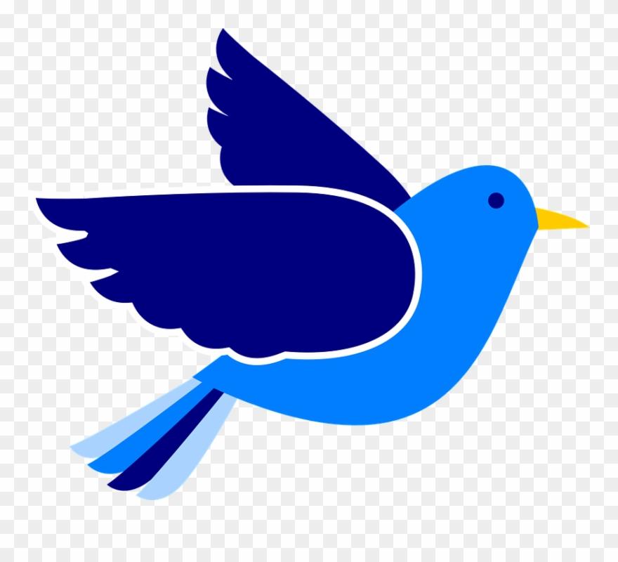 Pigeon clipart bird.