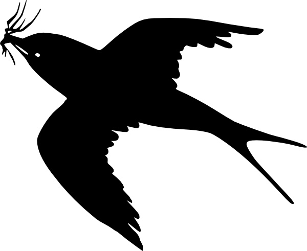 Flying bird clip.