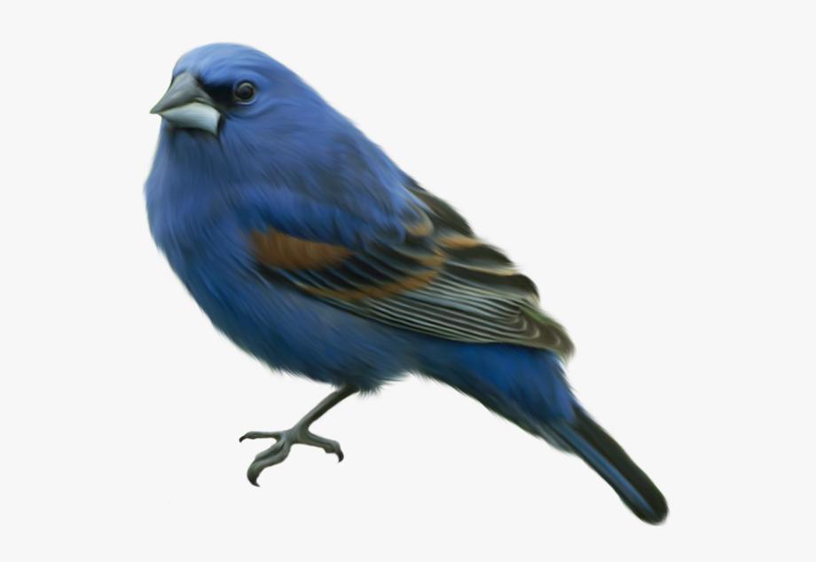Bird clip art.
