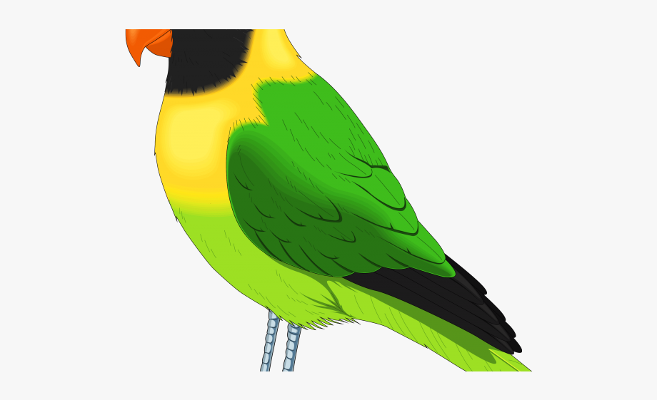 Bird clipart realistic. Cliparts image pack with