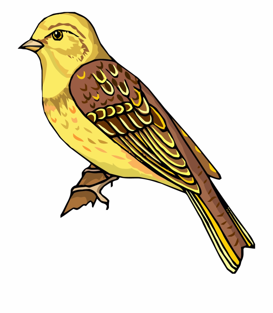 Bird clipart realistic. Staying png cliparts free