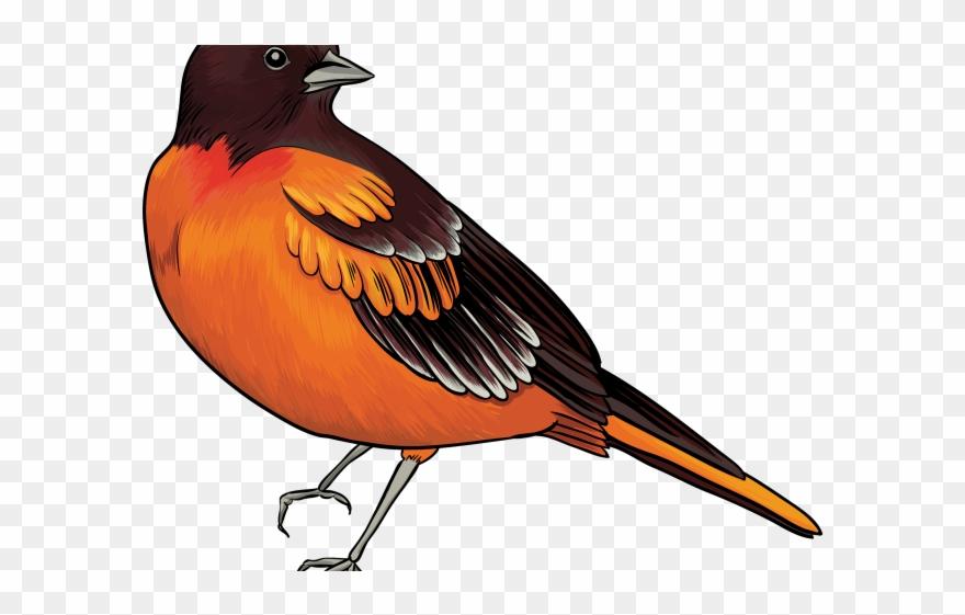 Bird clipart realistic. Kiwi transparent clip art