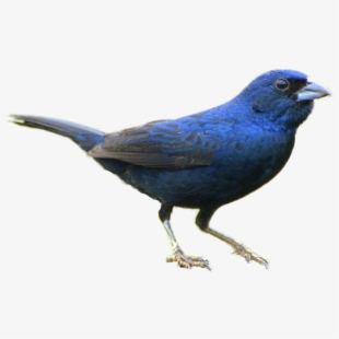 Bird clipart realistic. Bird clipart realistic. Download for free png