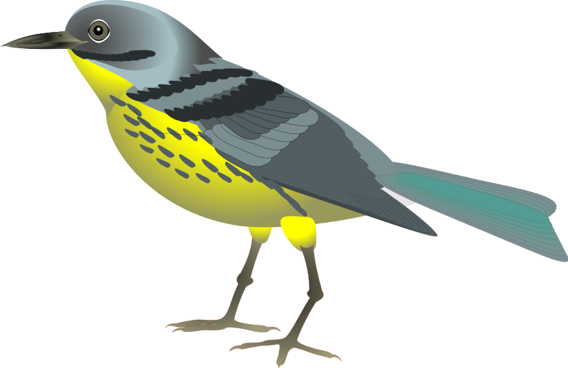 Bird clipart realistic. Free birds cliparts download