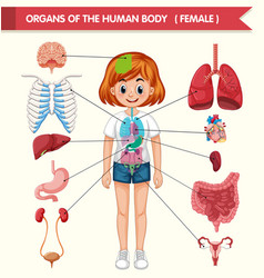 Body Parts Clipart Vector Images