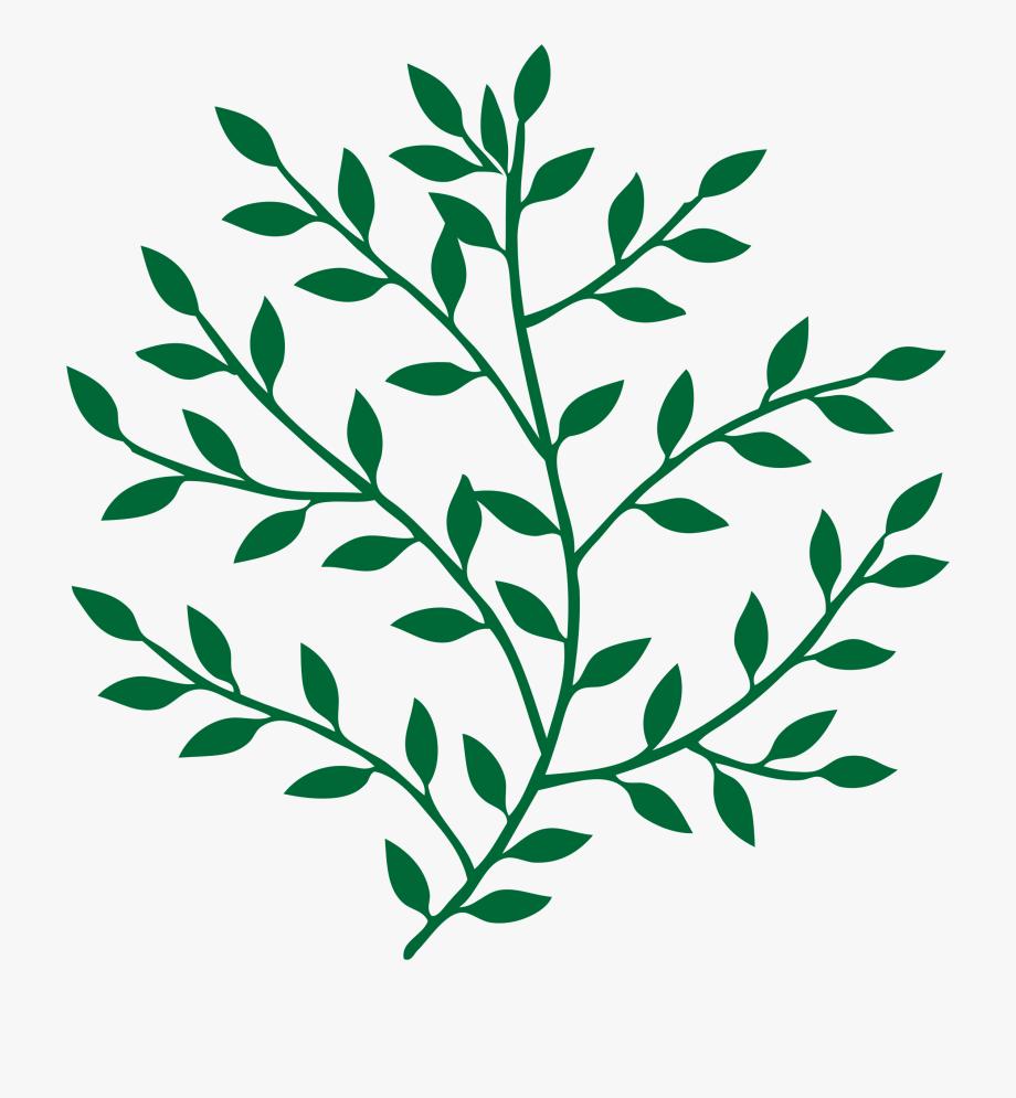 Leaf Branch Tree Bay Laurel Art