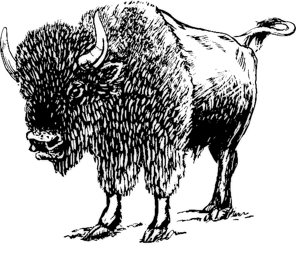 Free buffalo clipart clip art pictures graphics