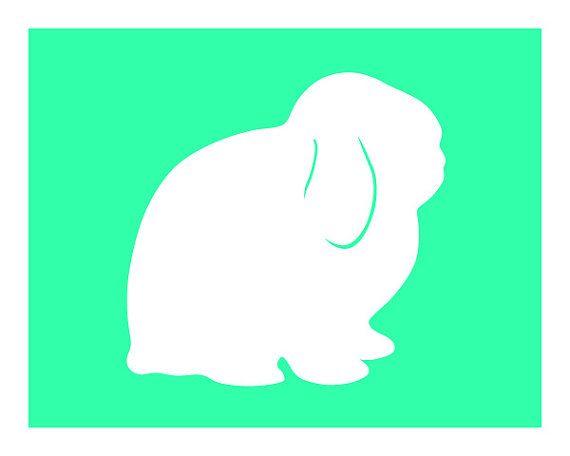 Holland lop bunny.