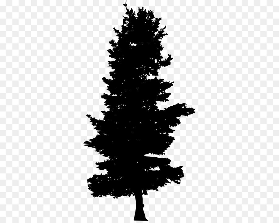 Pine tree conifers.