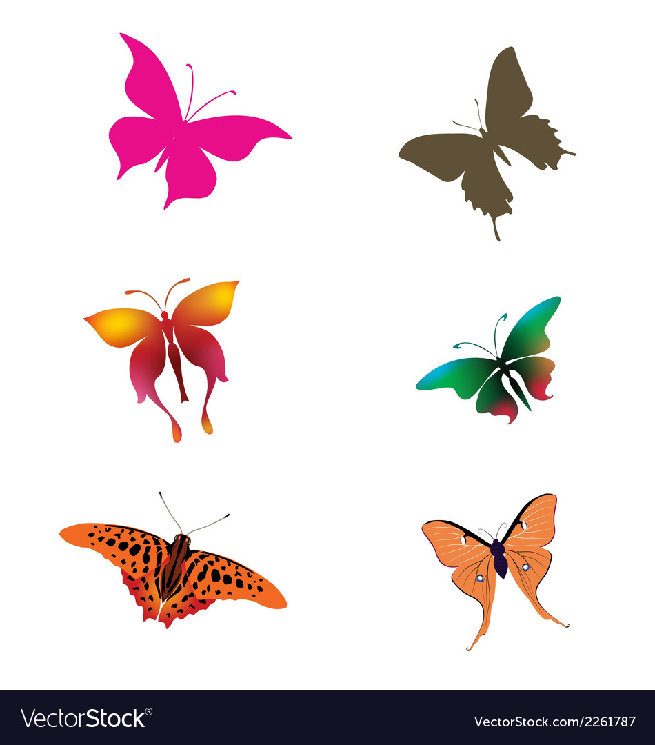 Collection butterfly clipart.